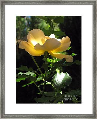 The Light Within 2 Framed Print by Michelle H