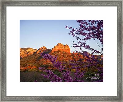 The Light Within Framed Print by Amy Strong