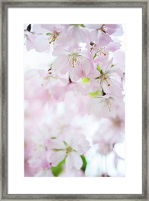 The Light Within Framed Print by Jenny Rainbow