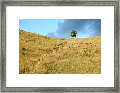 Framed Print featuring the photograph The Lines The Tree And The Hill by Yoel Koskas
