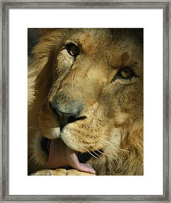 The Lion 3 Dry Brushed Framed Print