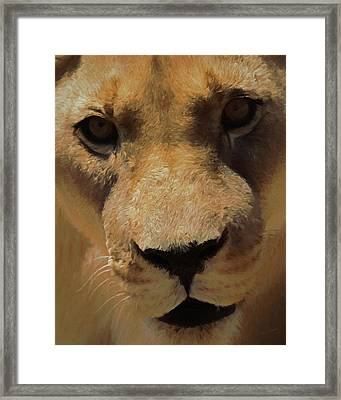 The Lion Da Framed Print