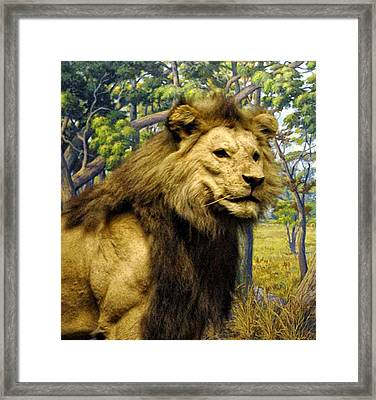 The Lion King Framed Print by Bill Cannon