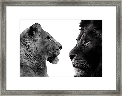 The Lioness And Lion Framed Print by Martin Newman