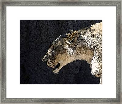 The Lioness Framed Print by Ernie Echols