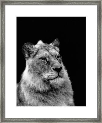 The Lioness Sitting Proud Framed Print