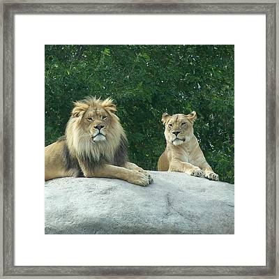 The Lions Framed Print by Ernie Echols