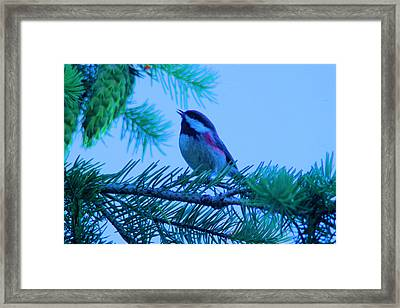 The Little Bird Sings Framed Print by Jeff Swan