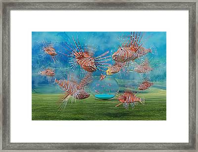 The Little Fish Framed Print
