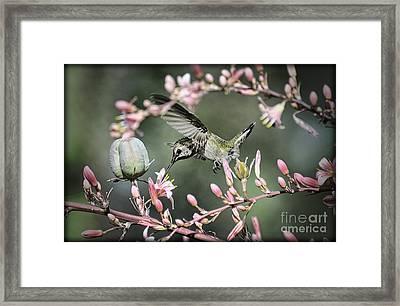 The Little Hummer  Framed Print by Saija  Lehtonen
