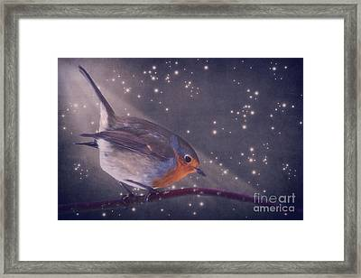 The Little Robin At The Night Framed Print by Angela Doelling AD DESIGN Photo and PhotoArt