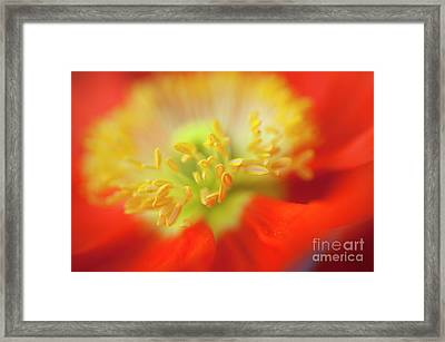 The Little Things Framed Print by Ronald Hoggard
