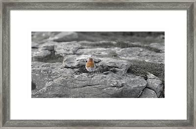 The Little Wise Follower Framed Print