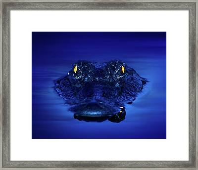 The Littlest Predator Framed Print