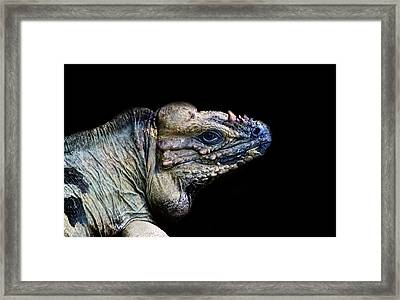 The Lizard King Framed Print