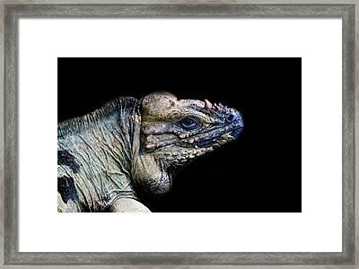 The Lizard King Framed Print by Martin Newman