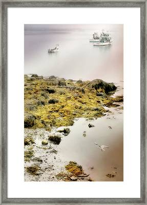 The Lobster Boats Framed Print by Diana Angstadt