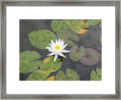 The Lone Bloom Framed Print by Jodi Marze Kass