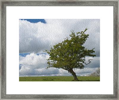 The Lone Bush Framed Print by Dave Byrne