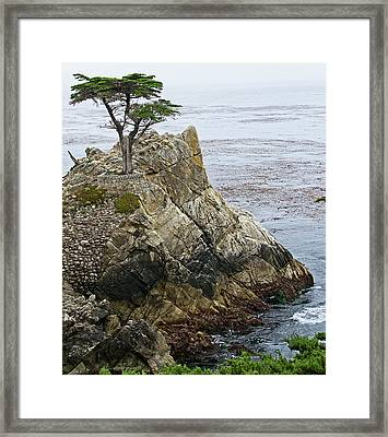 The Lone Cypress - California Framed Print