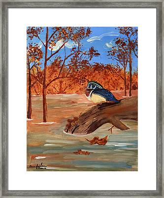 The Lone Duck Framed Print