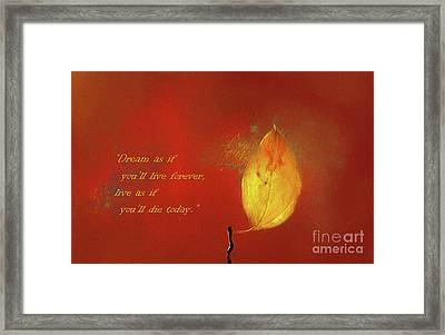 The Lone Leaf Framed Print by Darren Fisher