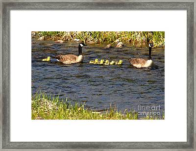 The Lone Straggler Framed Print by Adam Jewell