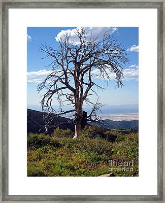 Framed Print featuring the photograph The Lone Tree by Juls Adams