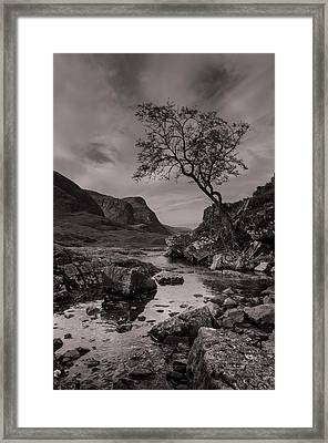 The Lone Tree Of Glencoe Framed Print by Ben Spencer