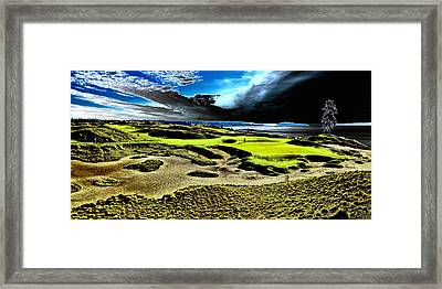 The Lone Tree On Chambers Bay - #15 Framed Print by David Patterson