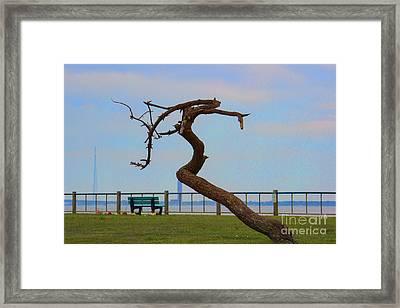 The Lone Tree Framed Print by Roberta Byram