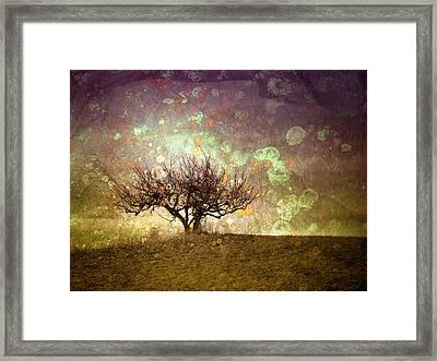 The Lone Tree Framed Print by Tara Turner