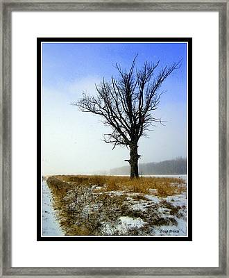 The Lone Tree Framed Print by Trina Prenzi