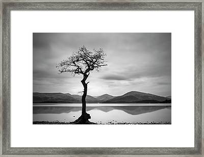The Lone Tree Framed Print