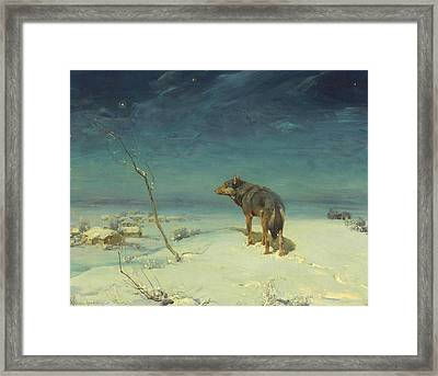 The Lone Wolf Framed Print by Alfred Kowalski