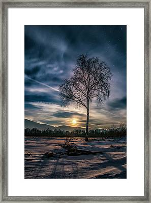 The Lonely Birch Framed Print