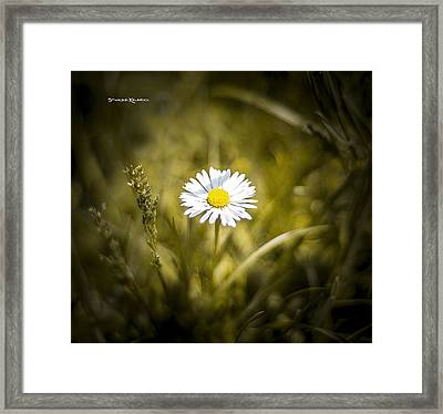 Framed Print featuring the photograph The Lonely Daisy by Stwayne Keubrick