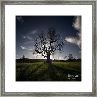 The Lonely Tree Framed Print by Angel  Tarantella