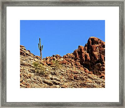 The Lonesome Saguaro Framed Print by Robert Bales