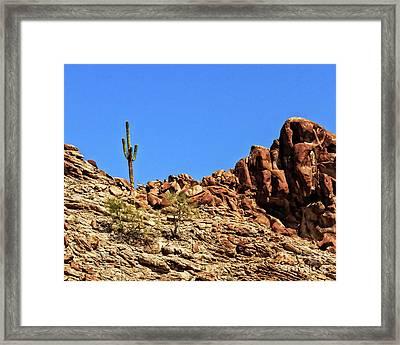 The Lonesome Saguaro Framed Print