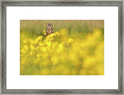 The Long Eared Owl In The Flower Bed Framed Print by Roeselien Raimond
