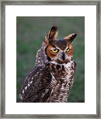 The Look Framed Print by Adele Moscaritolo