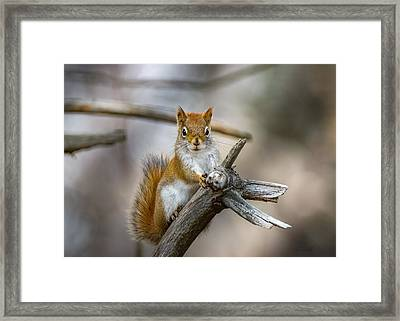 The Look Framed Print by Bob Orsillo