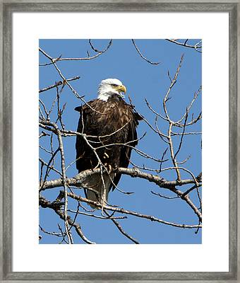 The Lookout Framed Print by Dave Clark