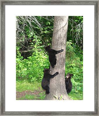 The Lookout Framed Print by Gerry Sibell