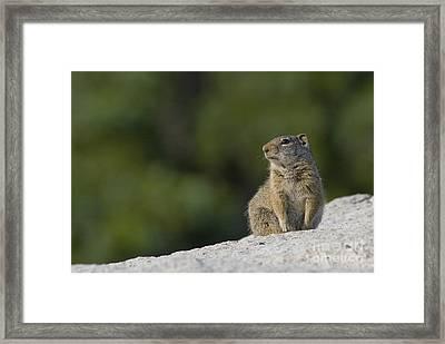 The Lookout Framed Print by John Blumenkamp