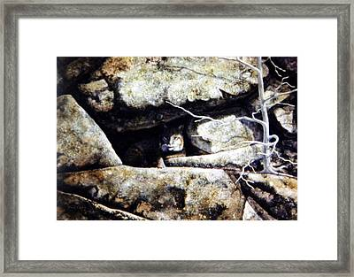 The Lookout Lynx Framed Print