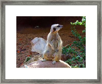 The Lookout - Meerkat Framed Print