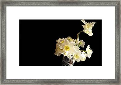 The Lookout Scout Daffodil Framed Print by ARTography by Pamela Smale Williams