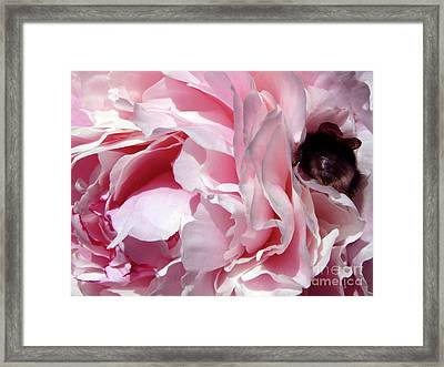 The Lost Bee 2 Framed Print
